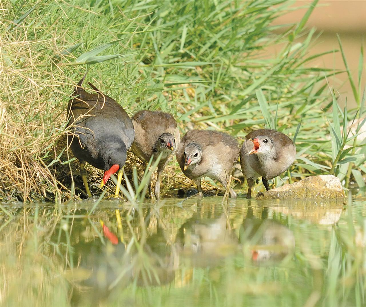 They are residents of the lake and the shrubs around it in the Dalikhana